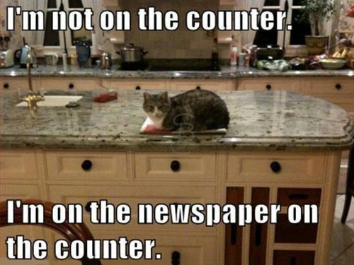 Lawyer cat has a good argument…