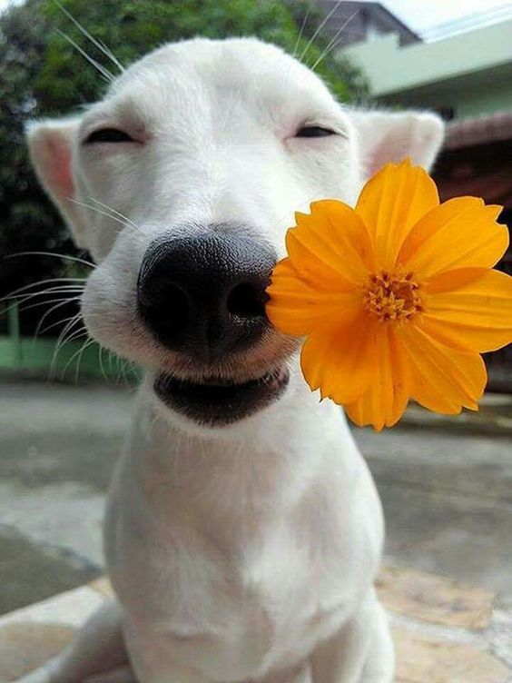 25 Adorable Smiling Dogs - Travels And Living