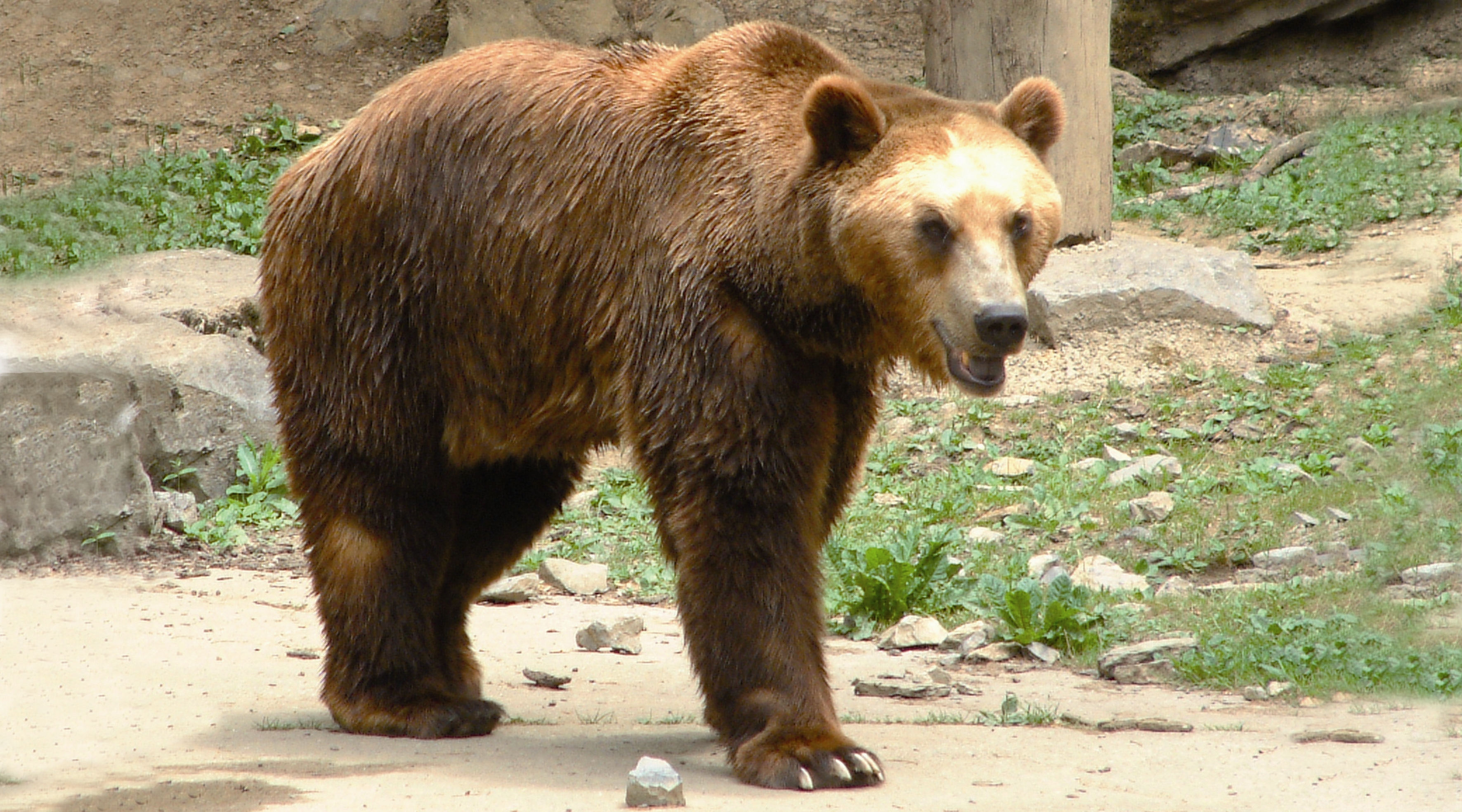 the image of a bear