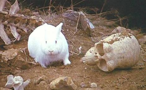 Rabbit of Caerbannog | Villains Wiki | FANDOM powered by Wikia