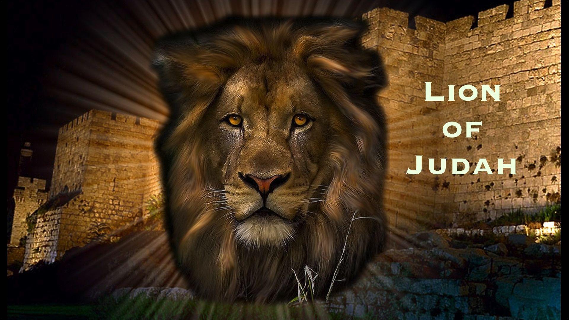 Lion Of Judah Wallpapers - Wallpaper Cave