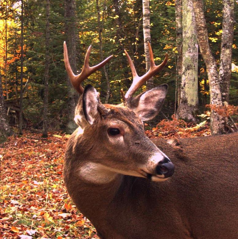 Roy Elsworth Memorial Big Buck Contest Entry Deadline @ Powers Hardware