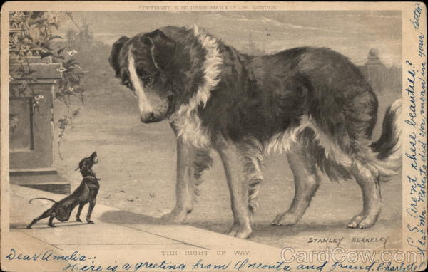 Small Dog Barking at Large Dog Saint Bernards