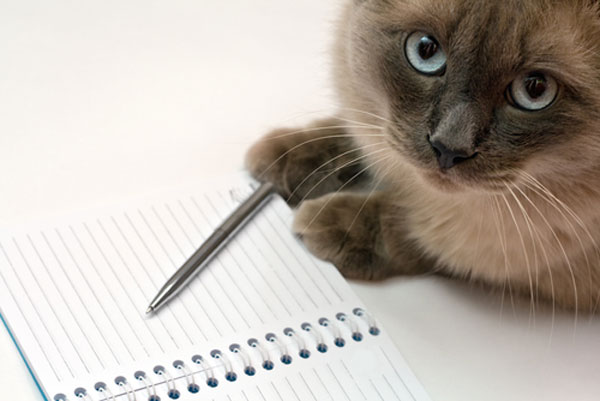 Girls Wins National Essay Contest by Writing About Her Cat