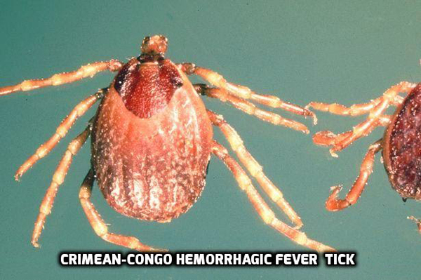 Uganda confirms Crimean-Congo Hemorrhagic Fever outbreak ...