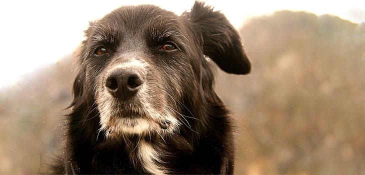 Senior Dogs are STILL Cute & Lovable   Cuteness Overflow