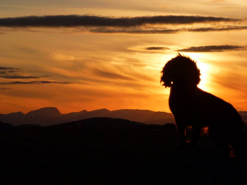 Remarkable sunset snap turns Jura the Cocker Spaniel into the Lion King - Deadline News