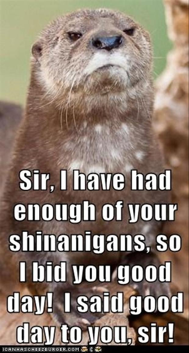 good day sir, funny animal pictures - Dump A Day