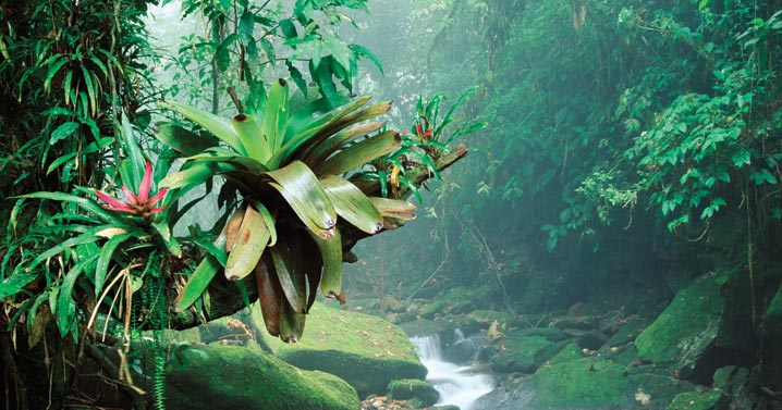 About the Rainforests of Mexico   Experience Traveling in ...