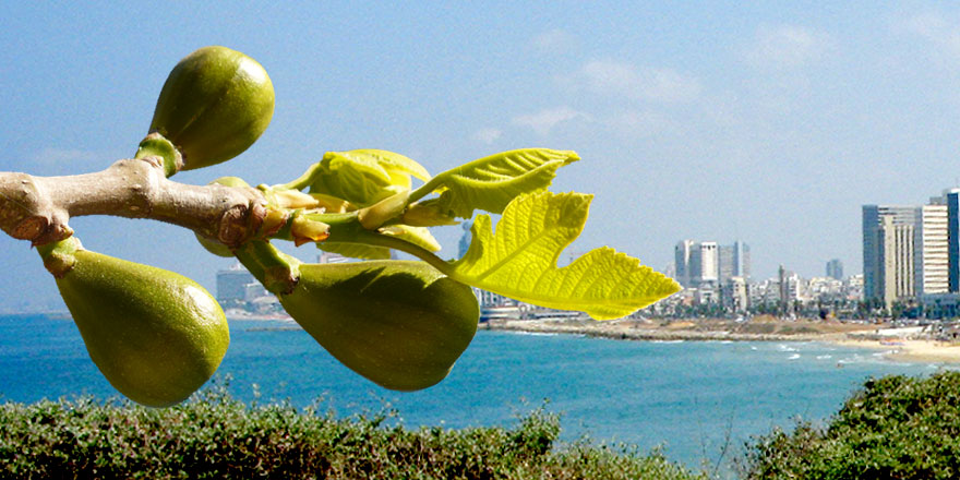 The Mystery of Israel the Fig Tree | An End-Time Sign