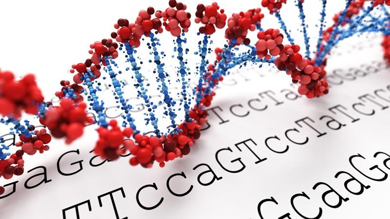 The Genetics of High Performance Exercise - Freelap USA
