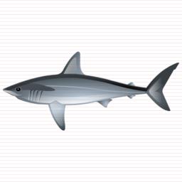 shark_icon.jpg