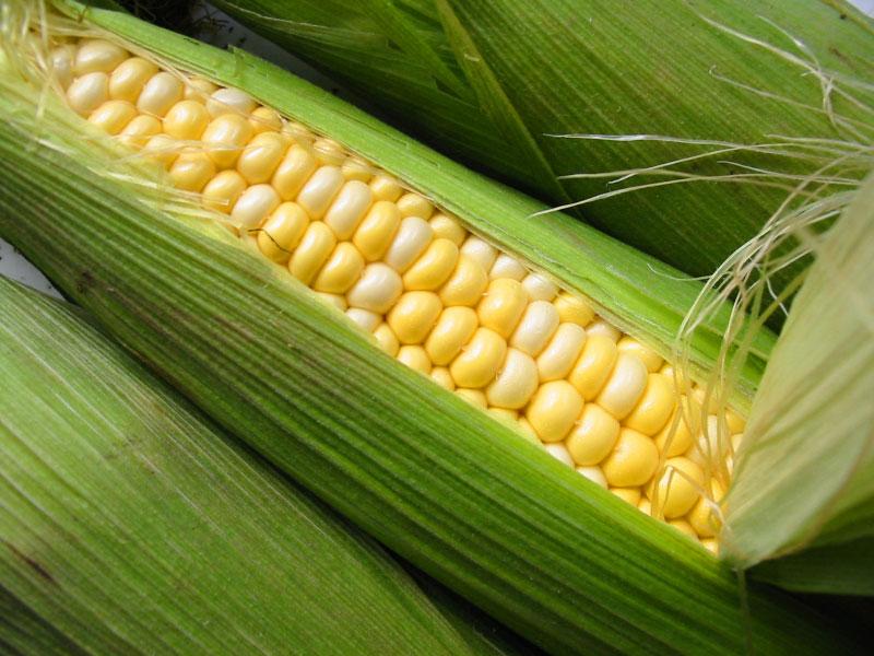 Sweet Corn - Ontario CropIPM