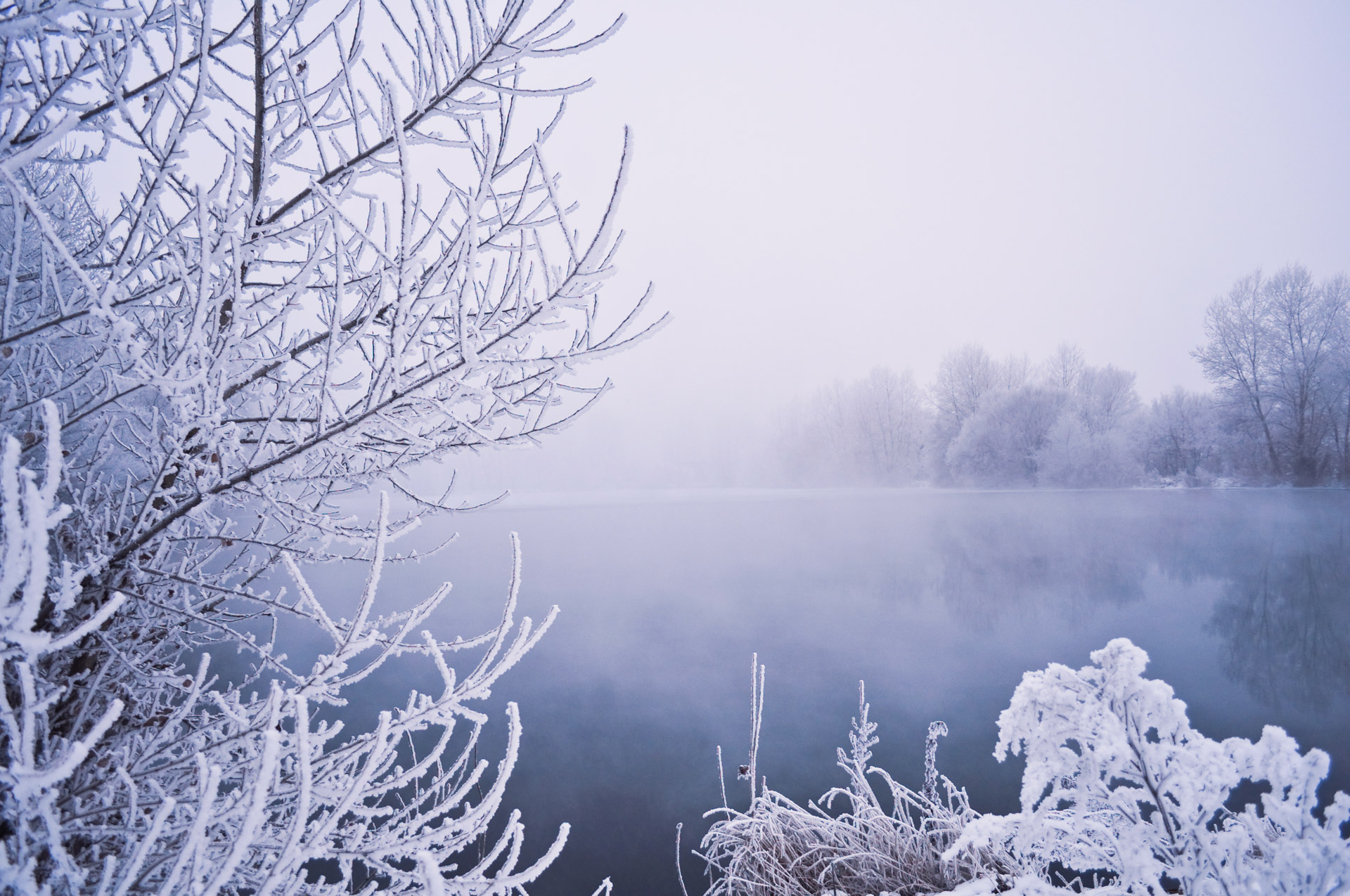 Winter Fog Free Stock Photo - Public Domain Pictures