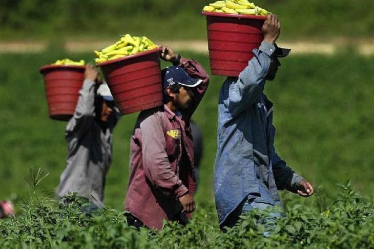 Modern day slavery: BigAg corporations repeatedly violate ...