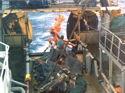 TerraNature | High seas fisheries bottom trawling bycatch
