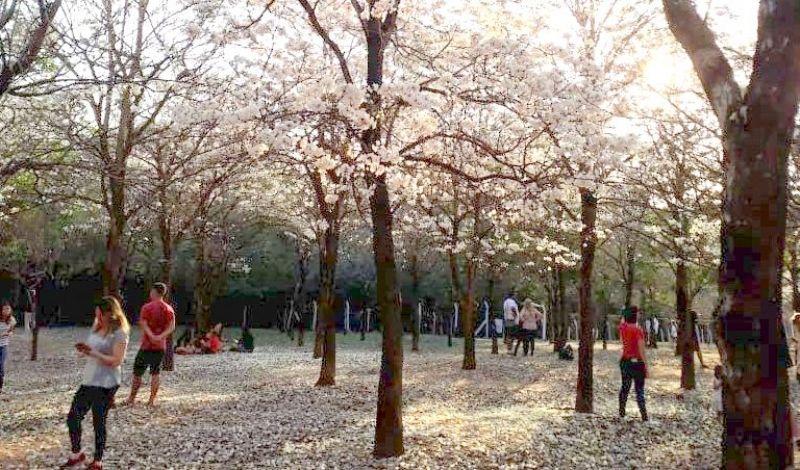 Primavera: Alegria das Flores!