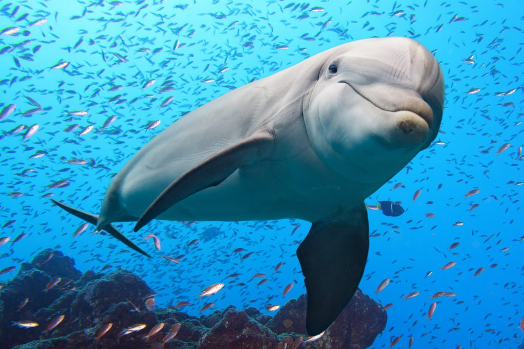 8 Surprising Facts About Dolphins