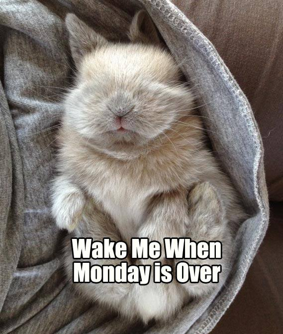 Rabbit Ramblings: Monday Bunny Meme*day (Over it)