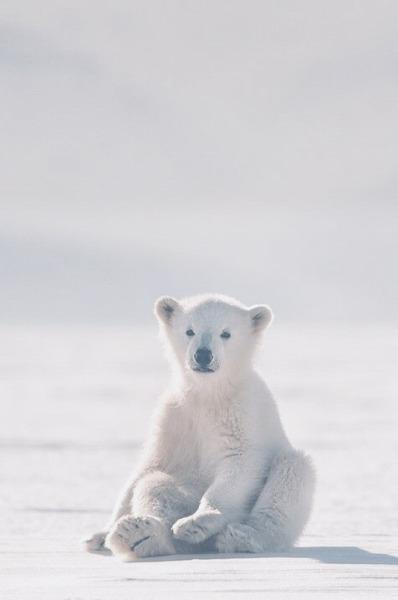 polar bear aesthetic | Tumblr