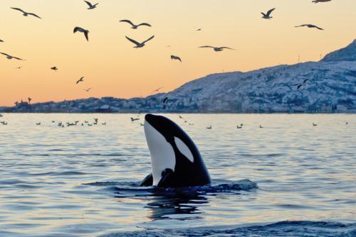 whale aesthetic | Tumblr