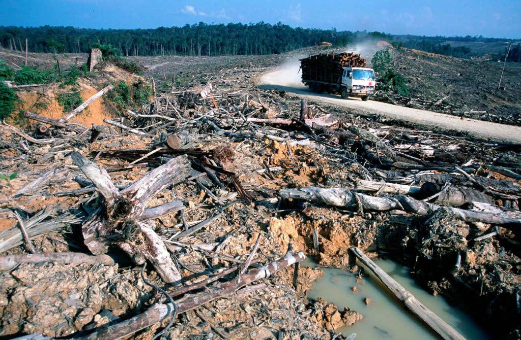 Ecuador lebt vom Öl - und nimmt die Abholzung des ...
