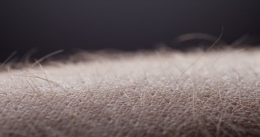 EXTREME Closeup, Male Arm Hairs Rise And Fall In Response ...