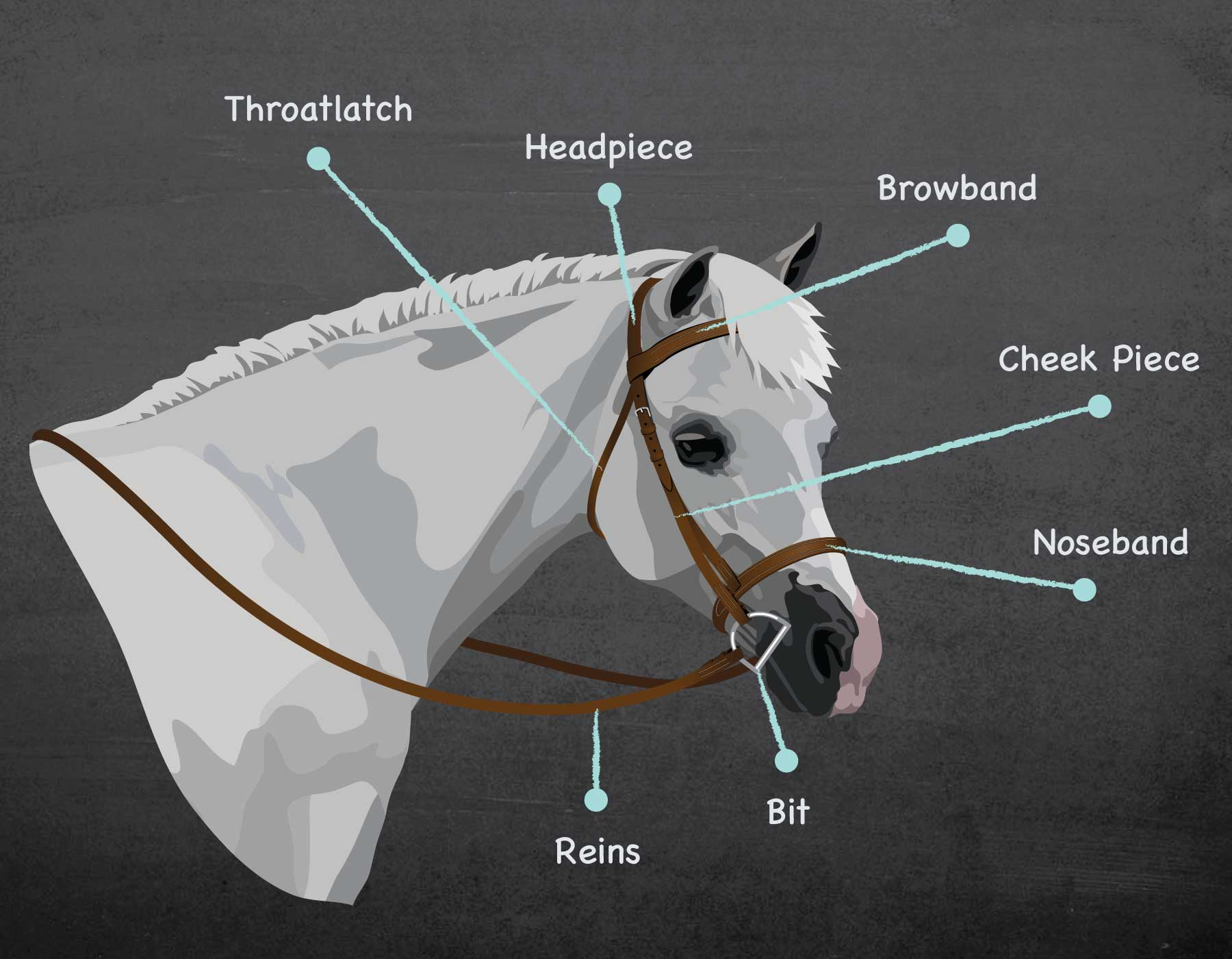 Bridle Parts & Types