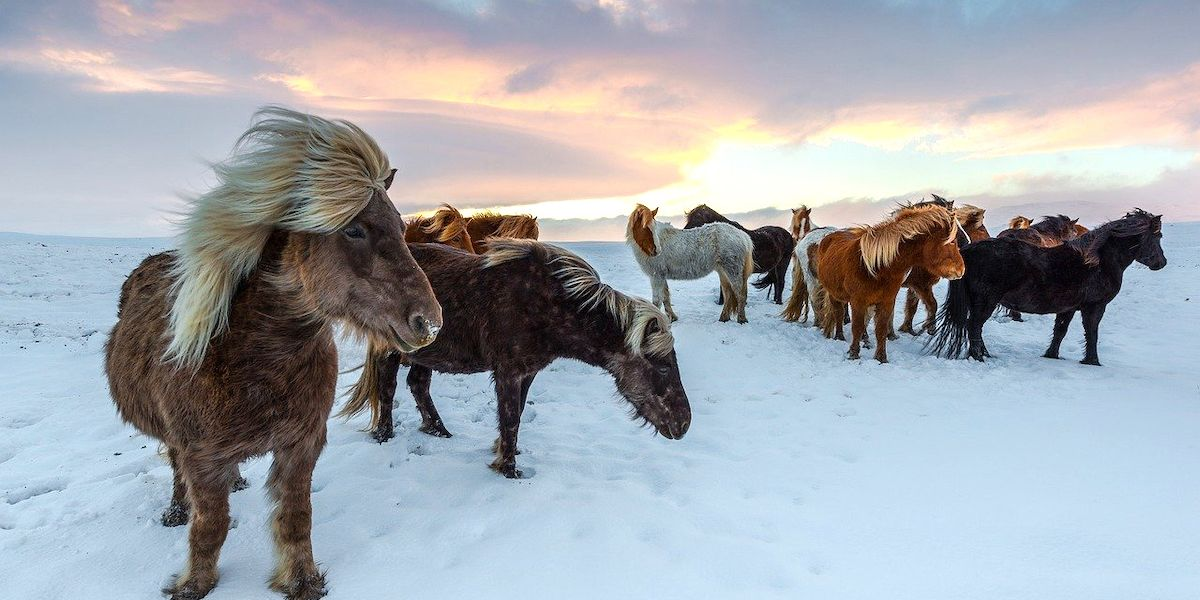 Flipboard: Horses Might Stop the Permafrost From Melting