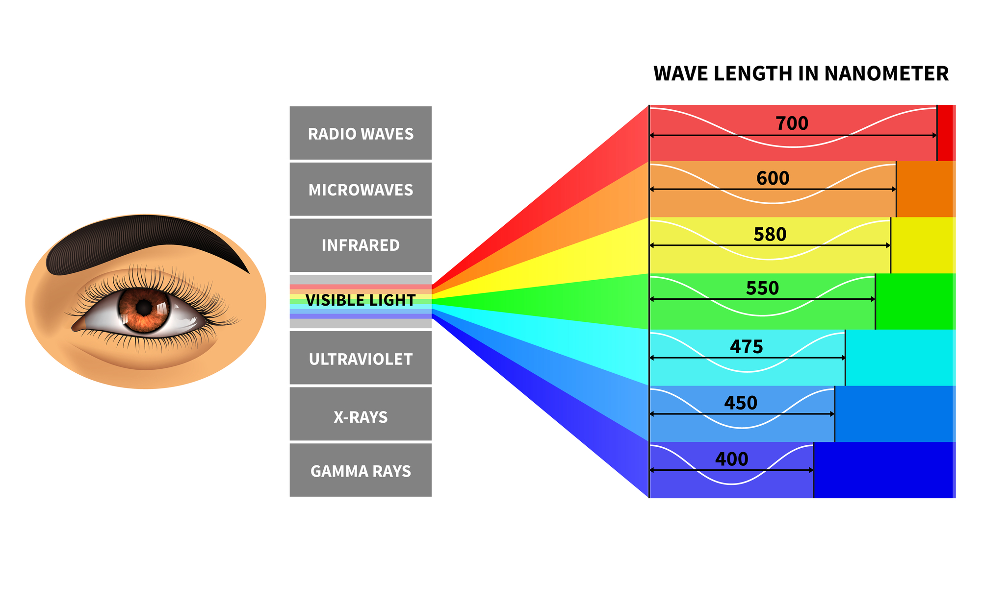 Visible light spectrum. Color waves length perceived by ...