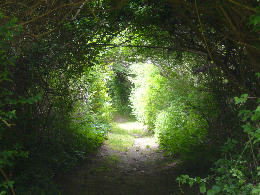 Path, Woods Hole, MA | Joe Futrelle | Flickr