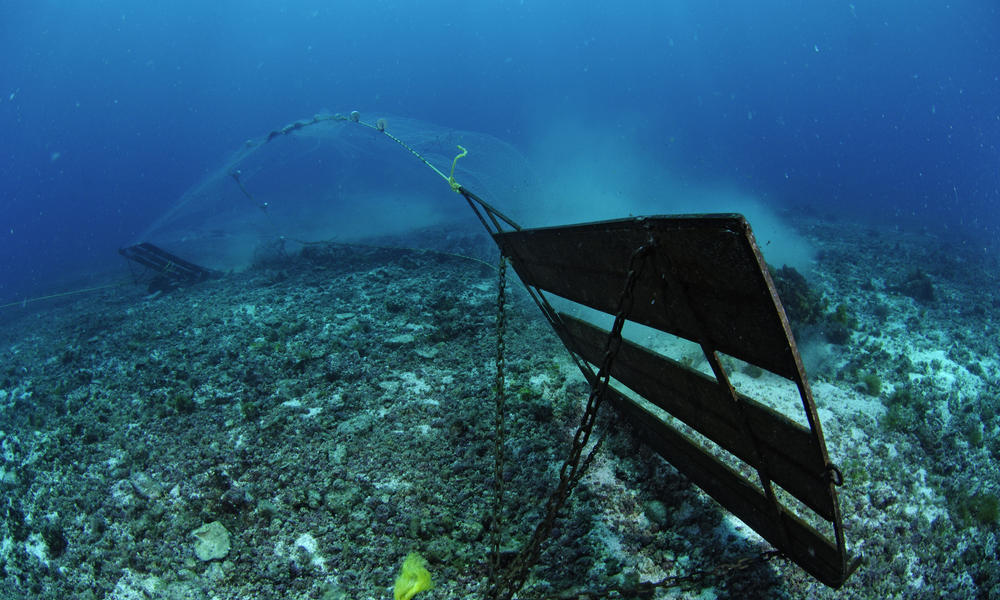 What is Bycatch? Understanding and Preventing Fishing Bycatch
