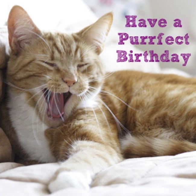 Cute Cat Birthday Quotes. QuotesGram