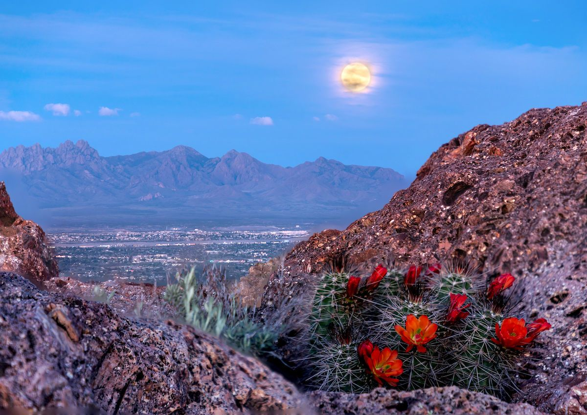 Best things to do in Las Cruces, New Mexico