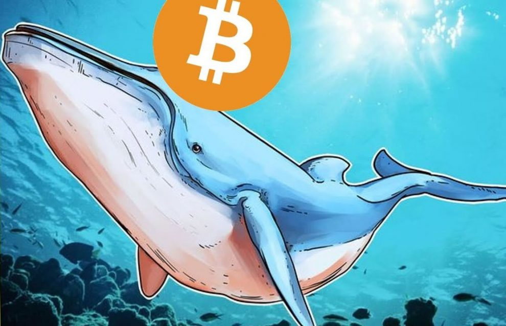 What's new about whales crypto - Cryptocurrency Market