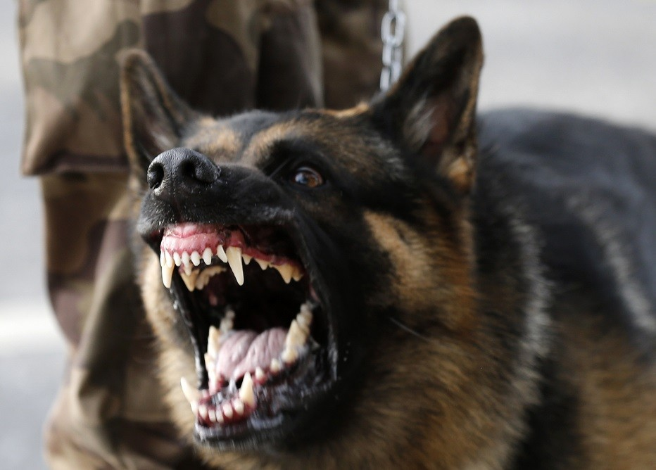 South Africa: Police Dog Bites Off Thief's Penis