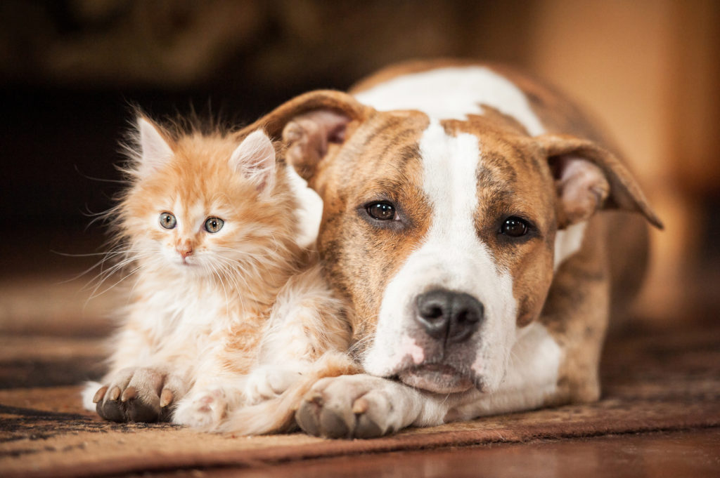 Which are smarter, cats or dogs? We asked a scientist ...