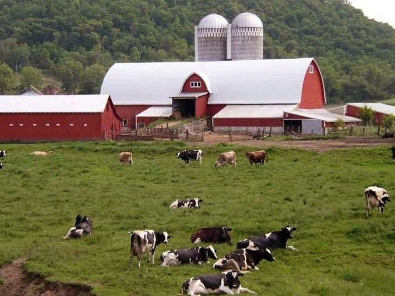 More than 800 dairies went out of business in Wisconsin last year, making 2019 among the worst years ever recorded for dairy closures in the state…