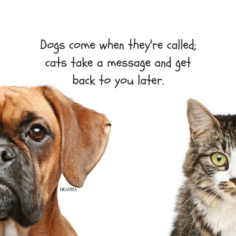 Cats vs Dogs quotes and funny sayings for your beloved pets
