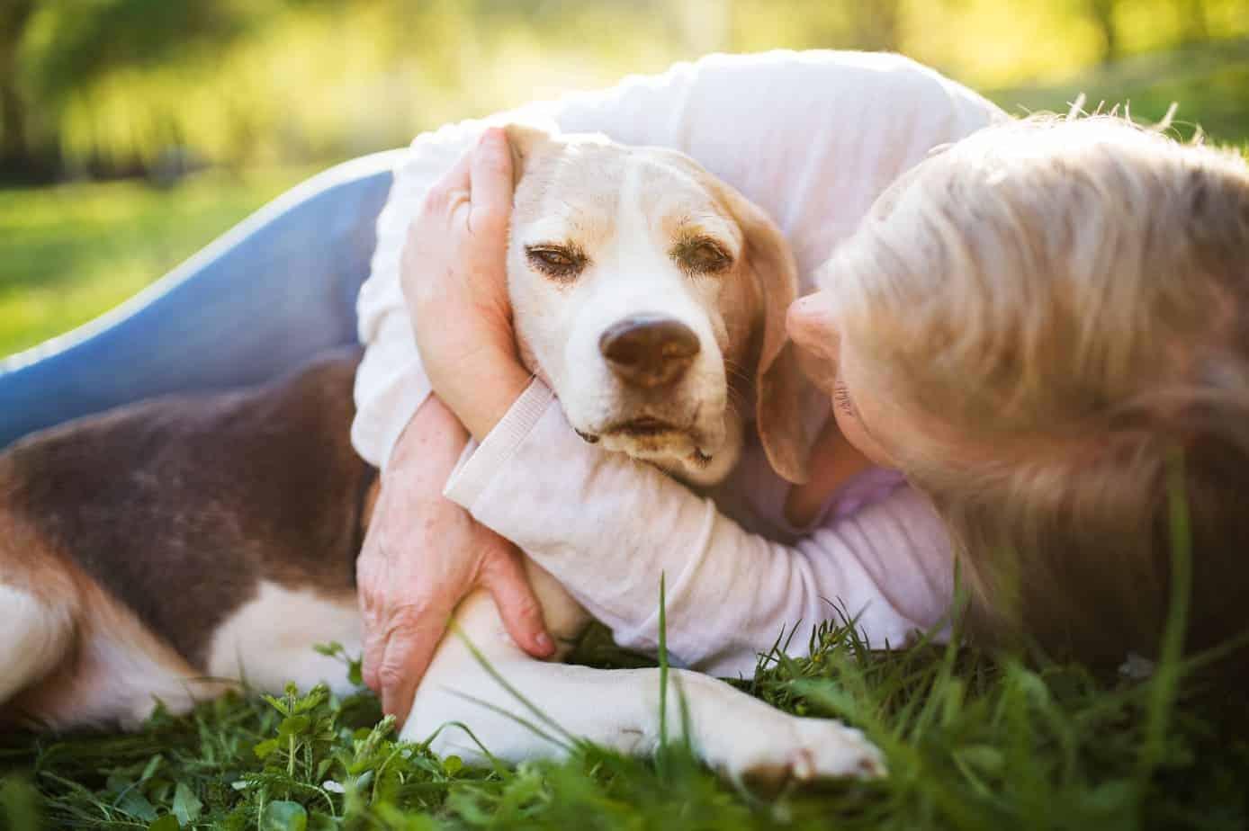 Senior dogs: Regular vet care, special attention to food ...