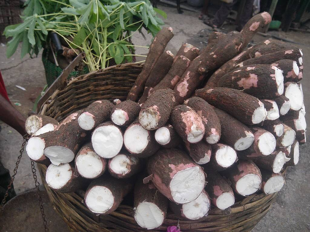 5 Things You Need to Know About Cassava Flour