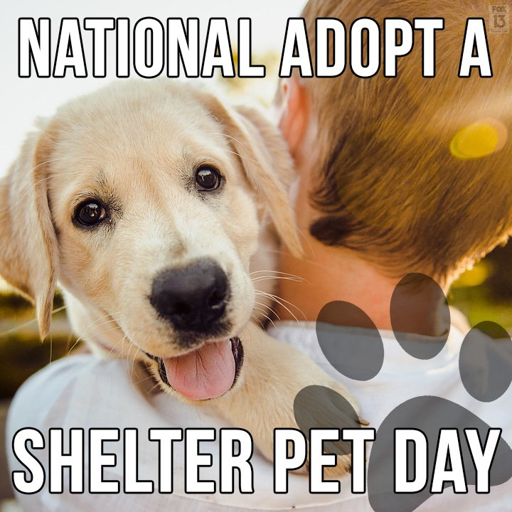 Happy National Adopt a Shelter Pet Day! | FACE Foundation
