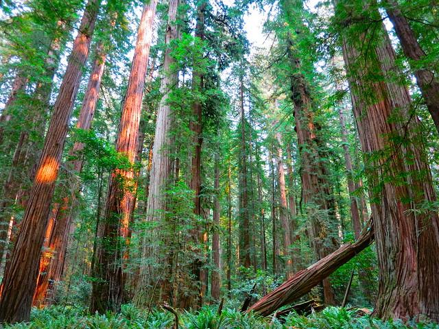 Flickriver: beautiful pine trees pool