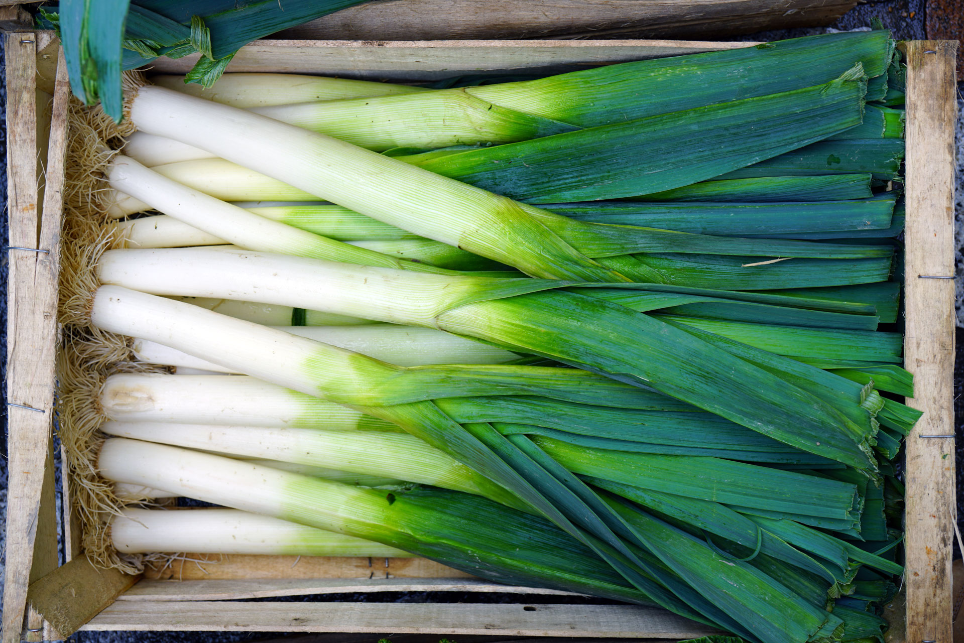 Leek Tops, Scallion and Spring Onion Greens | FoodPrint
