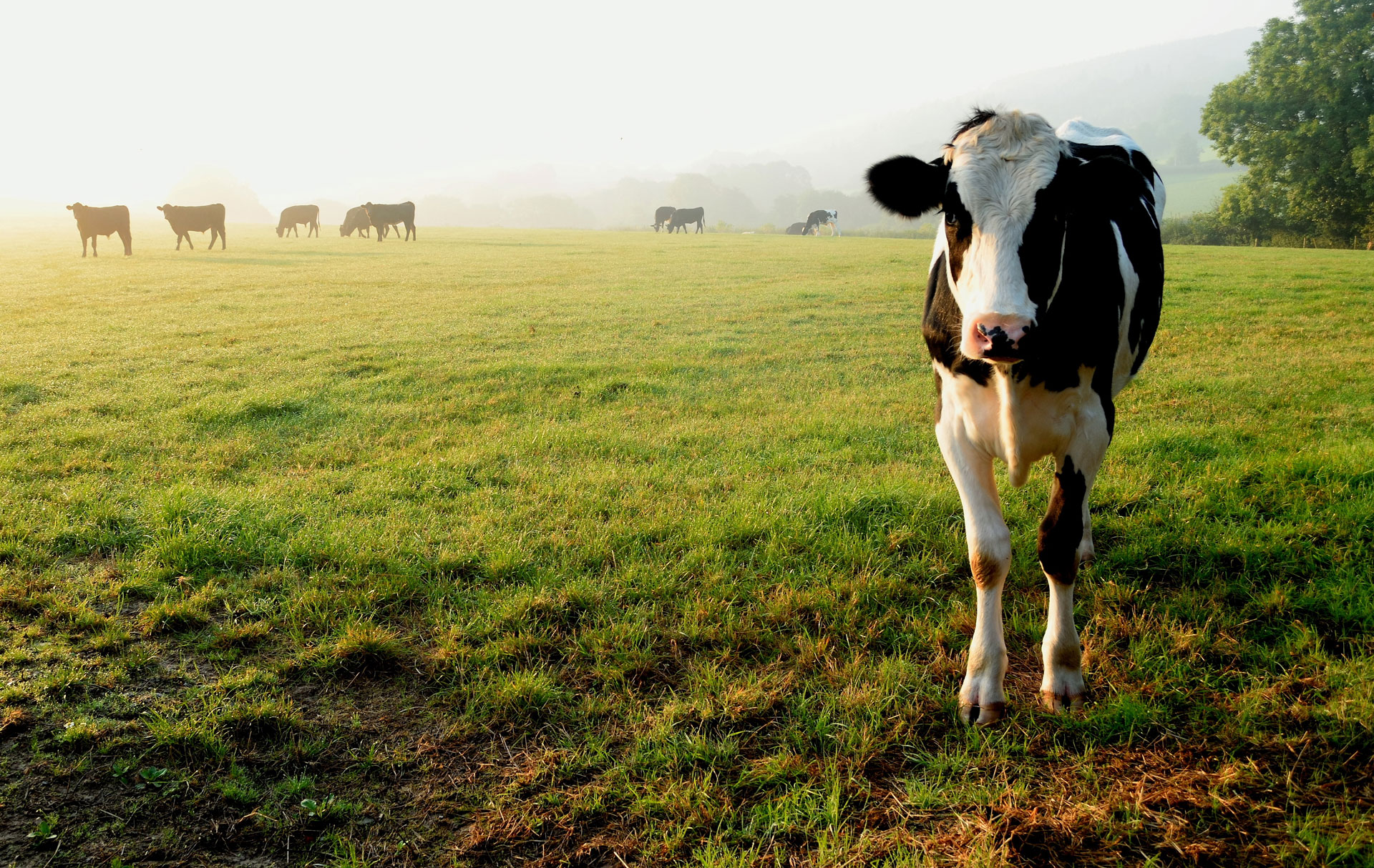 Dairy Production's Impact on Environment, Animals and People | FoodPrint