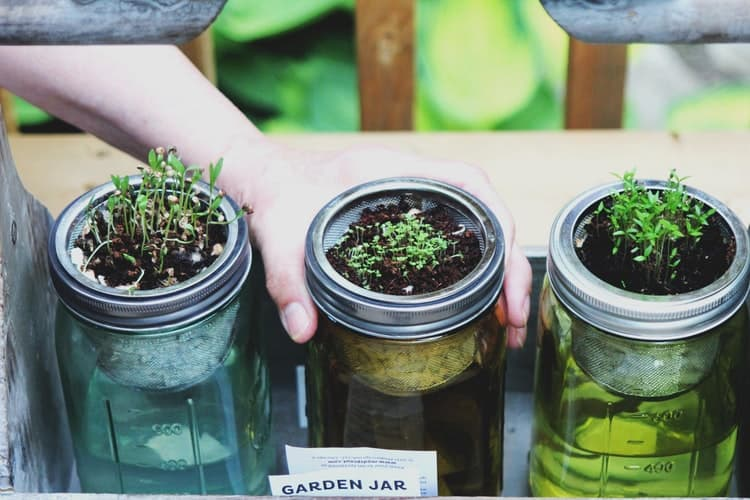 Hydroponic Herb Garden- A Guide To Design Your Herb Garden