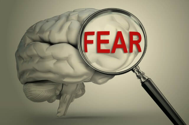 Fear-free life? Removing a part of your brain could make it possible—in theory   Genetic ...