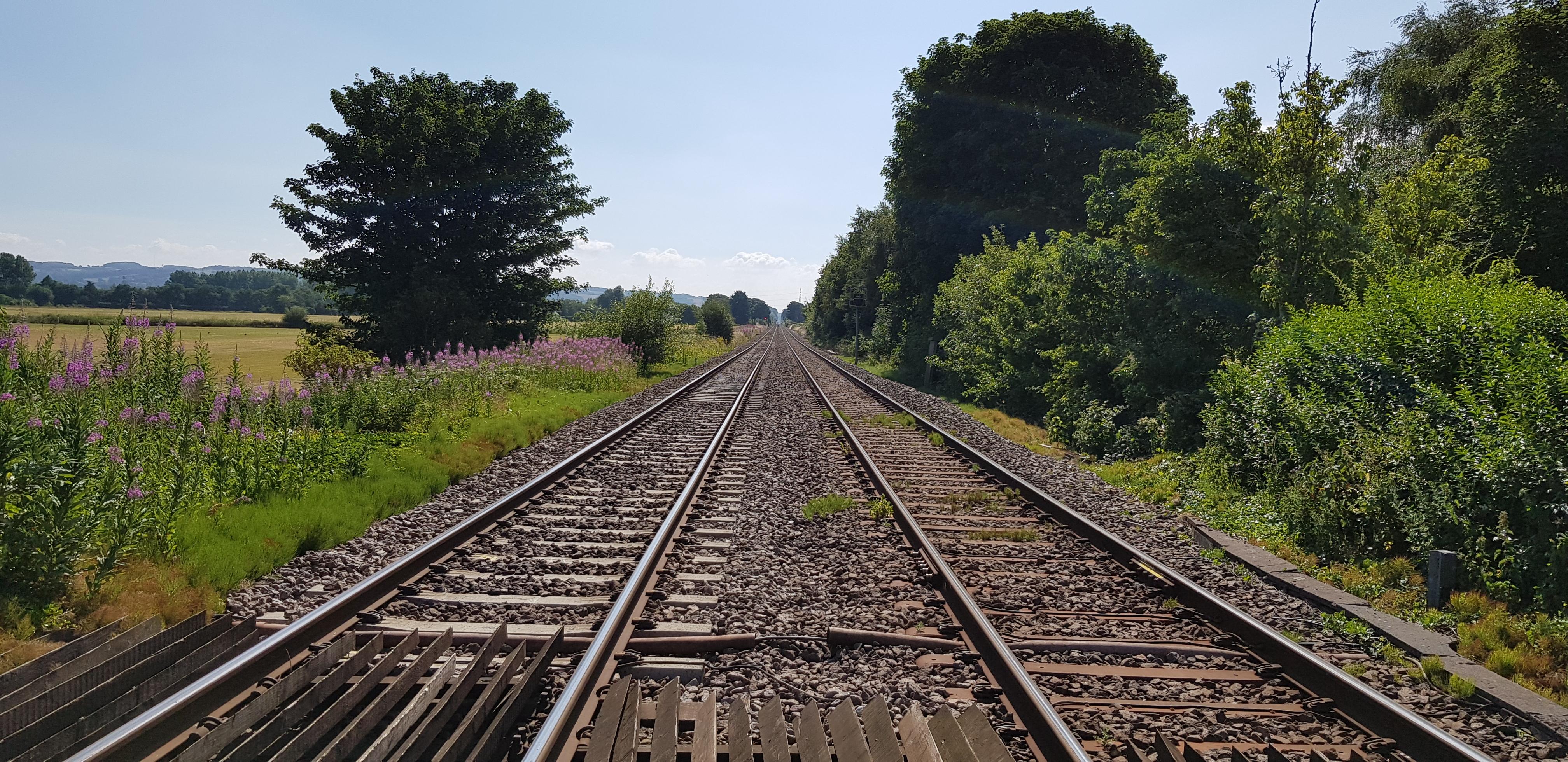 Free Images : railway, tracks, track, rail transport, tree ...