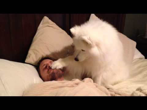It's Time to Wake Up and Be Best Friends Human - I Has A ...