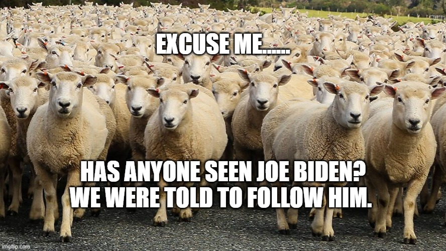 Image tagged in trump sheep - Imgflip